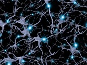 neurons-with-electrical-synapses-firing