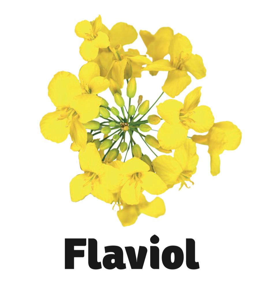Flaviol kvet